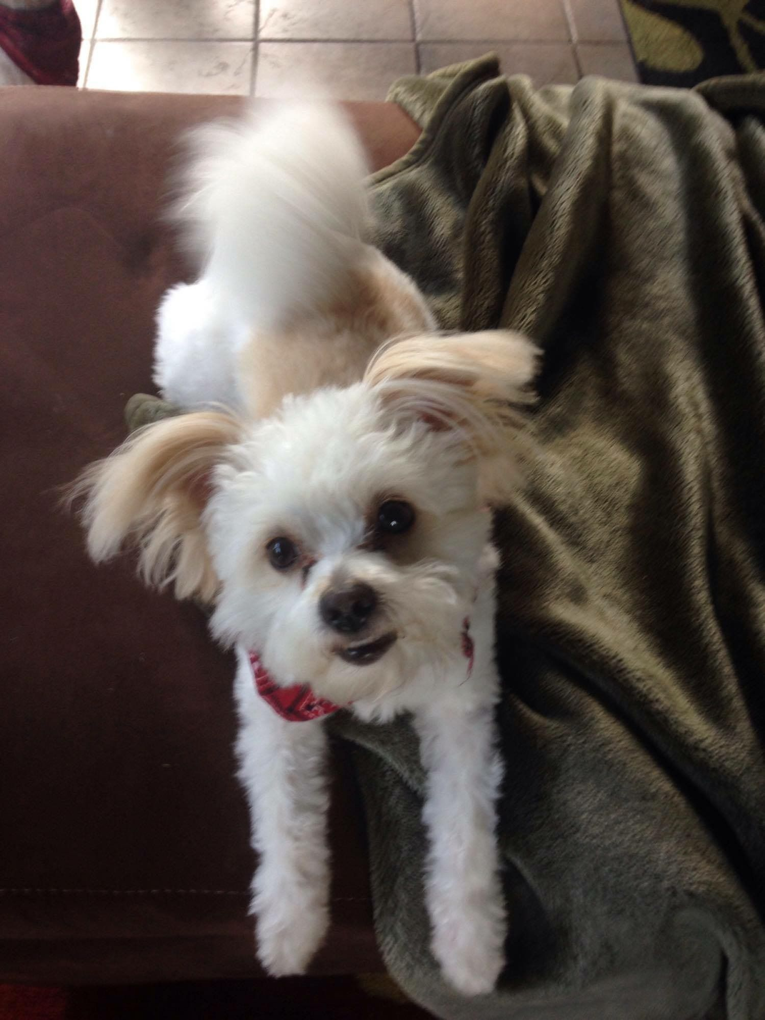 Little White Dog Rescue Pictures