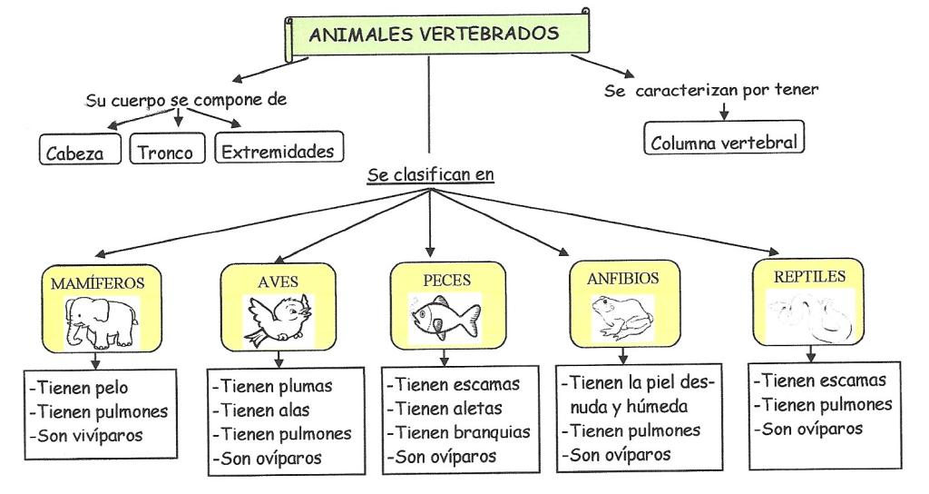 esquema animales vertebrados para escolares   Ciencias - Animales ...