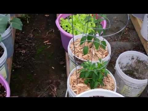 Larry's Self Watering Rain Gutter Grow Garden Update! June 16 th 2012 Grow Baby Grow!