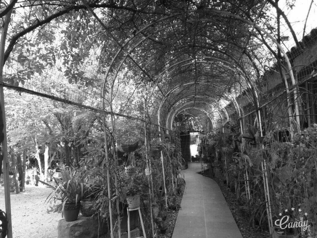 Camino de orquídeas