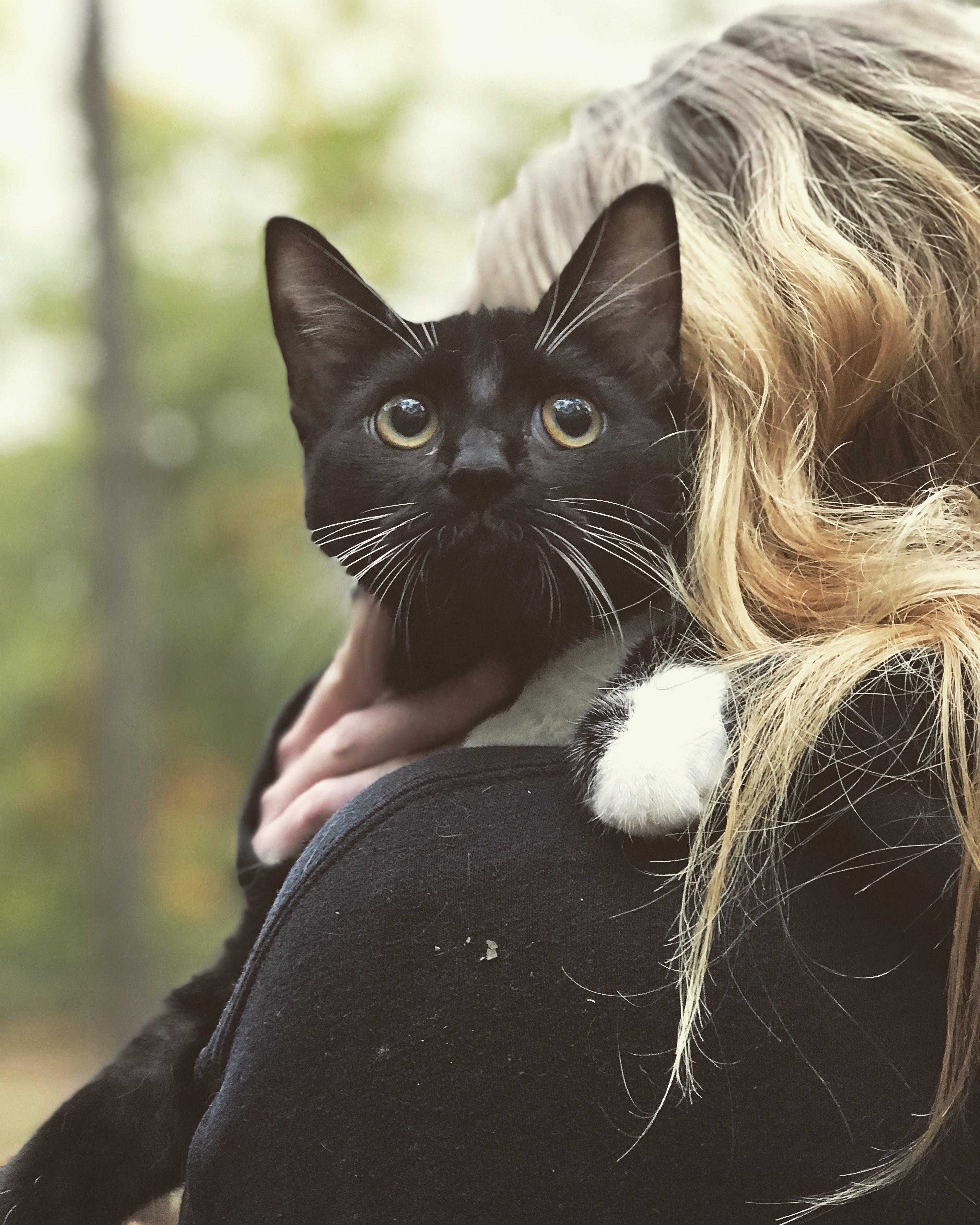 Sheba My Familiar Named For Her Majesty Cat Having Kittens Cat Fleas Bicolor Cat