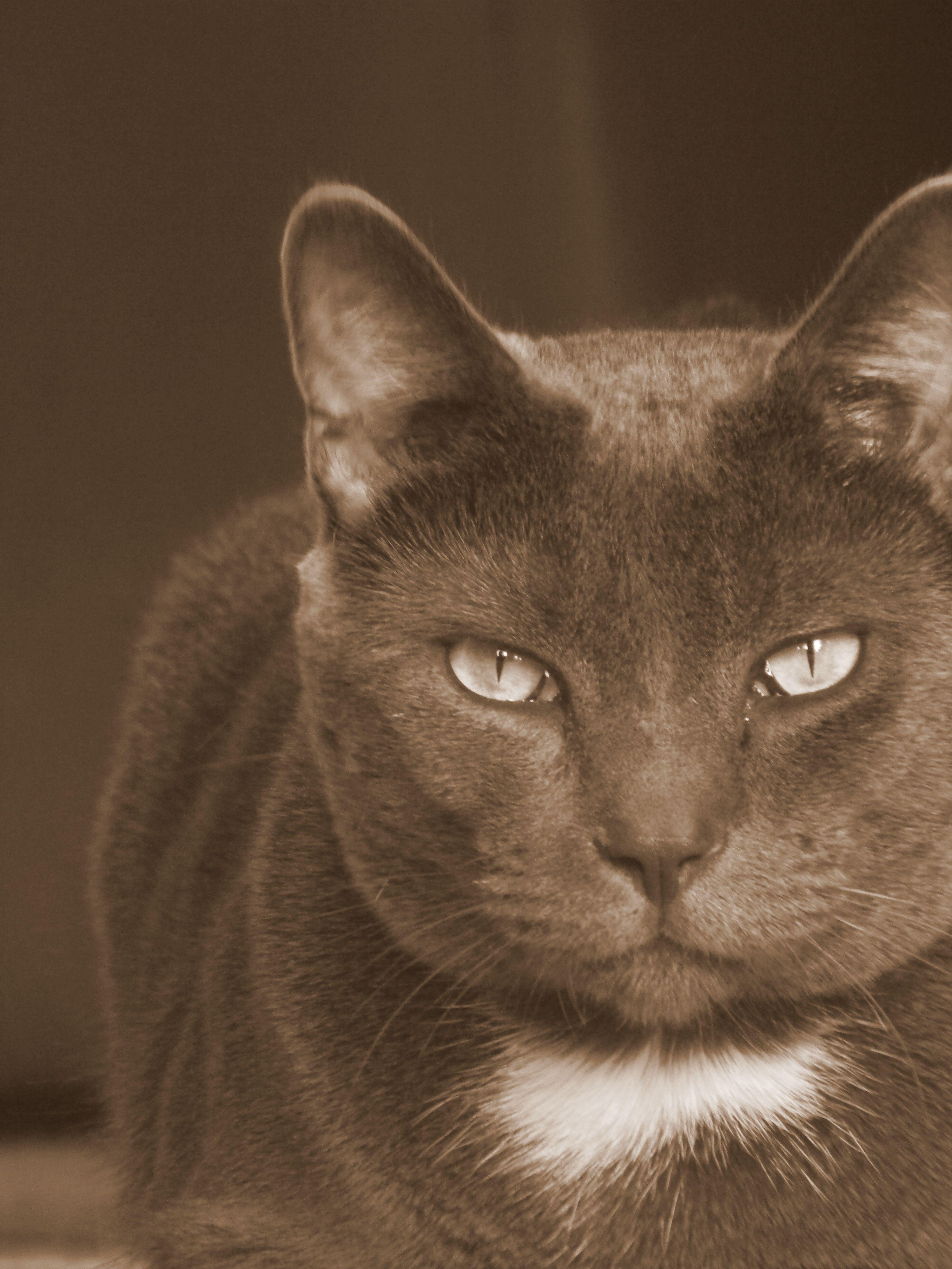 Cat Photography, fierce but lovely