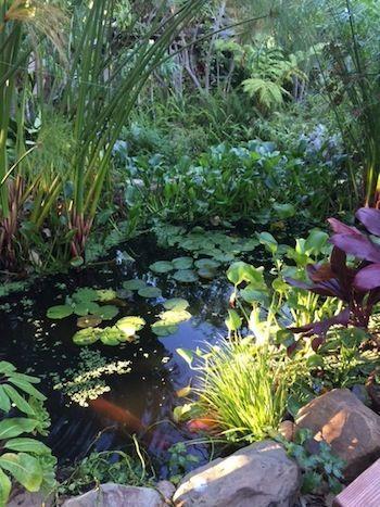 pond building album one estanques para peces Pinterest Pond
