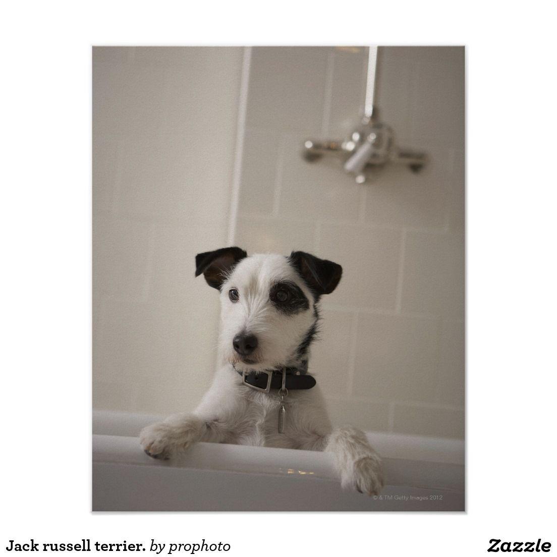Jack Russell Terrier Poster Zazzle Com Dog Shampoo Diy Dog Shampoo Dogs