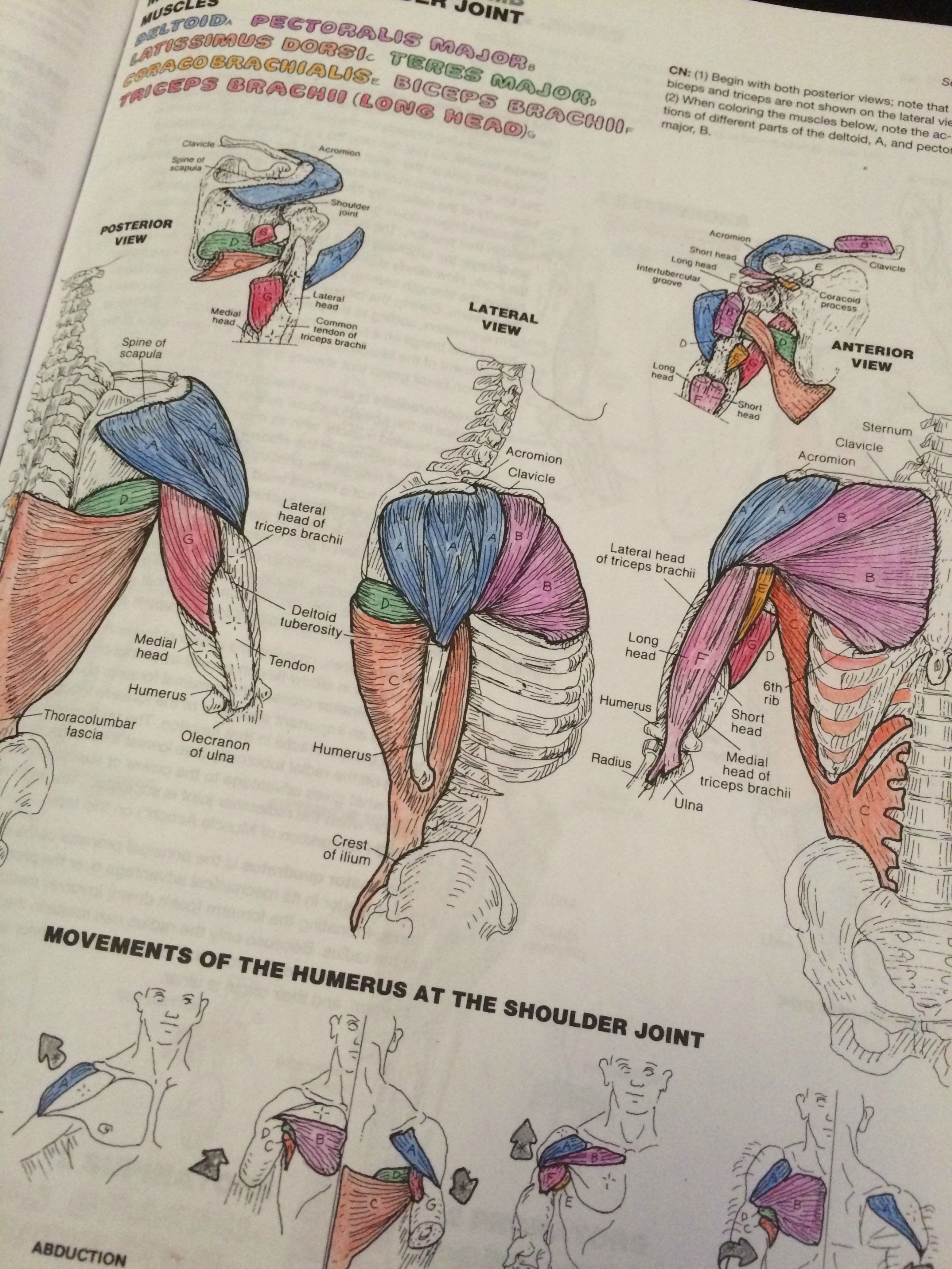 Anatomy And Physiology Coloring Workbook Answer Key Lovely 48 Most First Class Dental Anatomy Coloring Anatomy Coloring Book Coloring Books Coloring Book Pages
