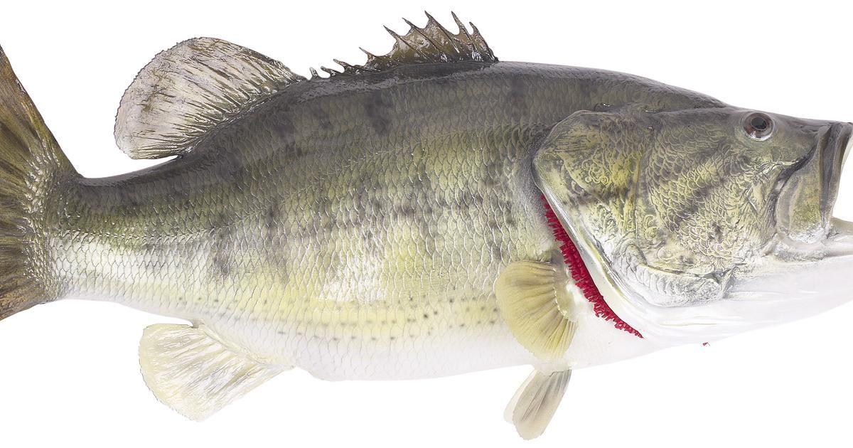Cómo lanzar lejos en la pesca con caña y carrete | La pesca, Pesca y ...