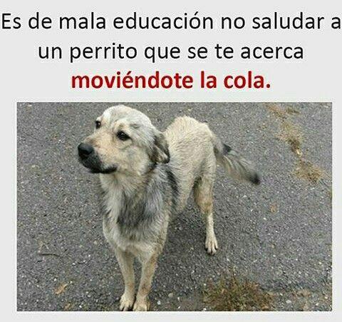 Siempre Hay Que Saludar A Los Perritos Perros Frases Memes Perros Memes Divertidos Sobre Perros
