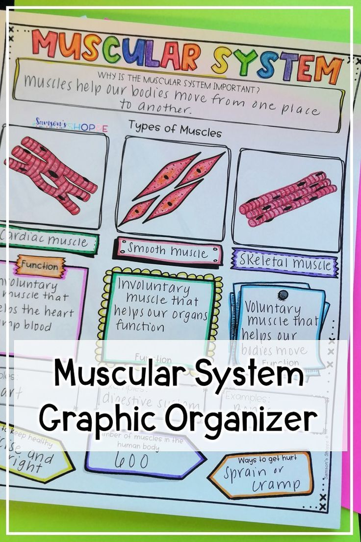 Muscular System Review Activity For Muscles In 2020