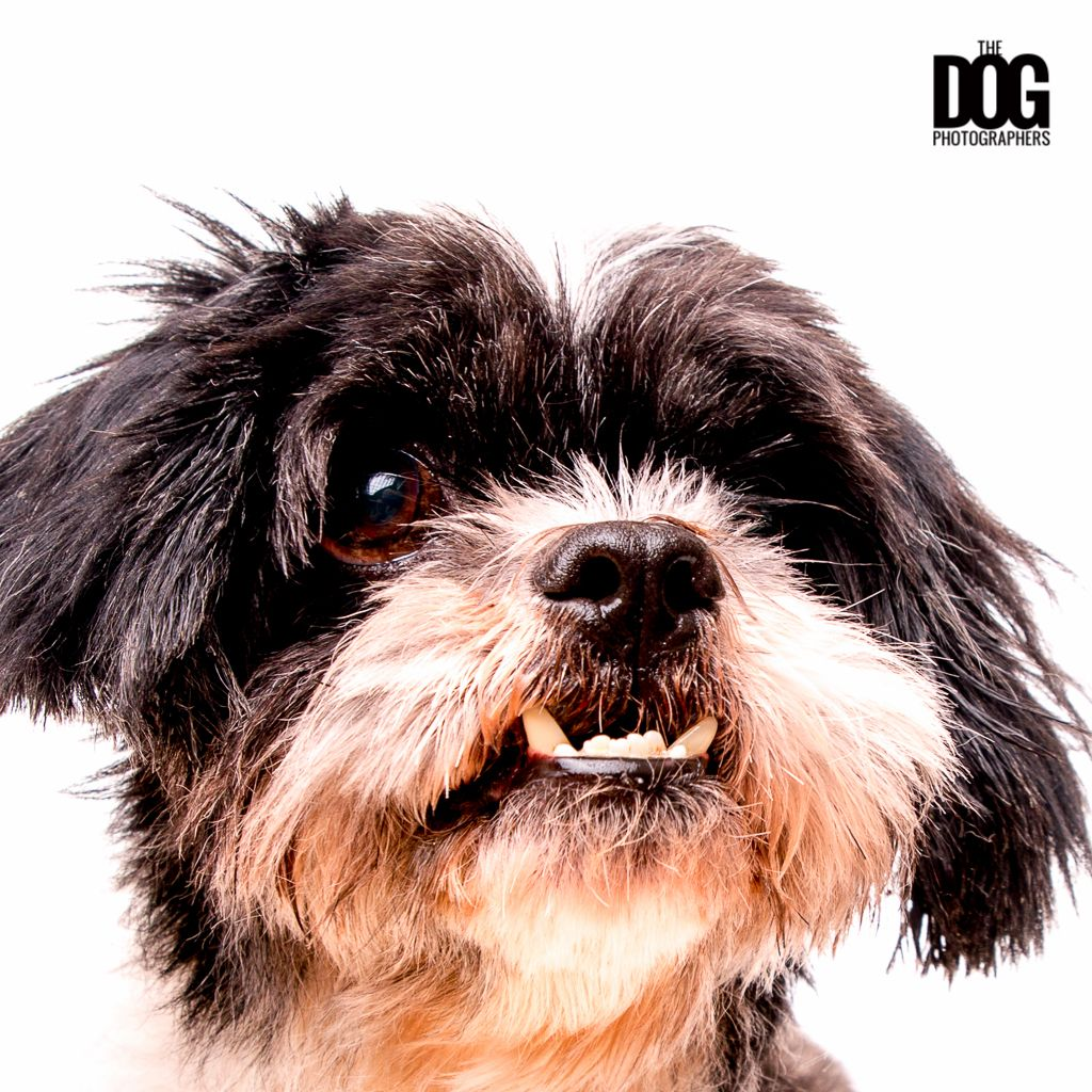Pin By The Dog Photographers On Woof Woof Dog Photography Pet
