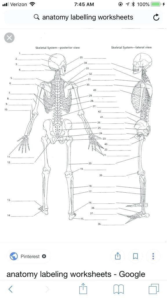 Printable Anatomy Labeling Worksheets Human Body Labeling ...