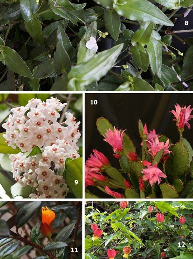 Excepcional Plantas: as top 50 | Flores de cera, Flores de maio e Véus de noiva GF36