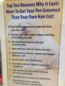 Top 10 reasons of the costs of dog grooming - this is a good one :)