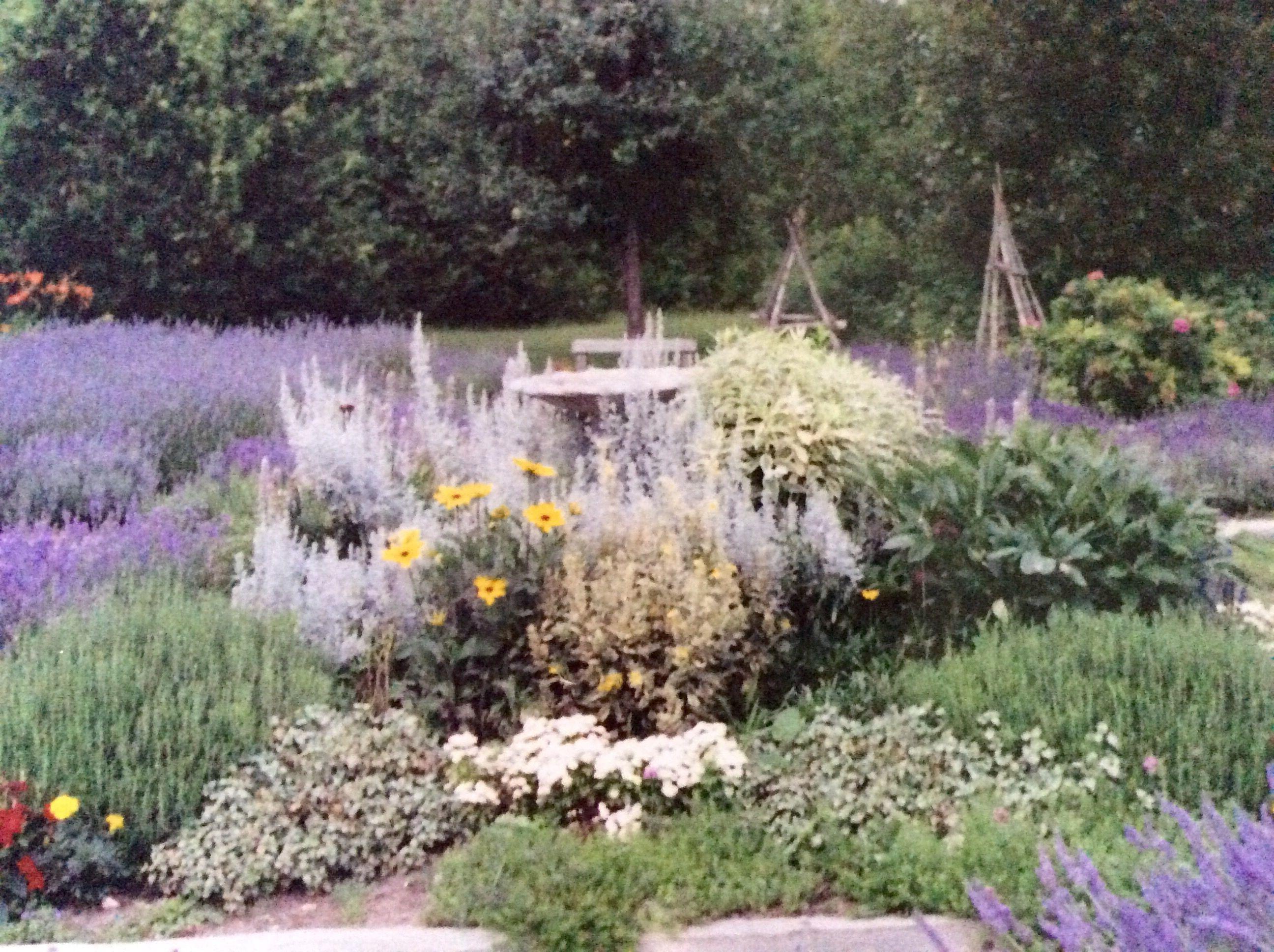 Stoney Hollow Lavender's garden.