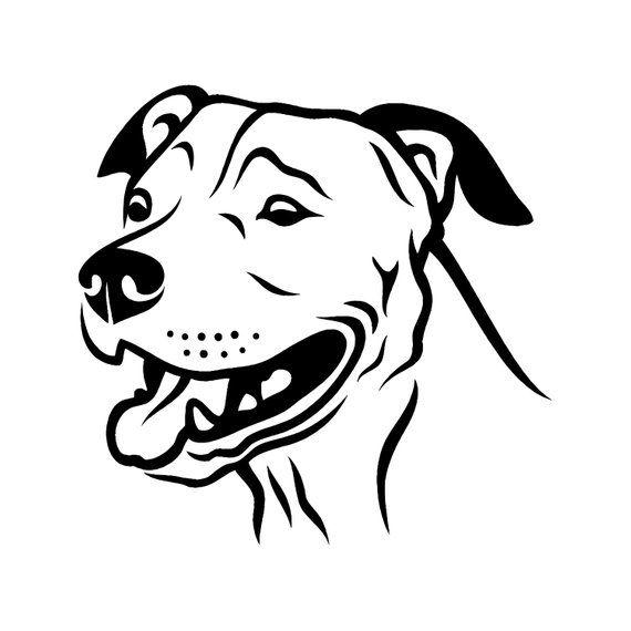 American Pit Bull 3 Pitbull Bully Staffordshire Terrier Pit Bull
