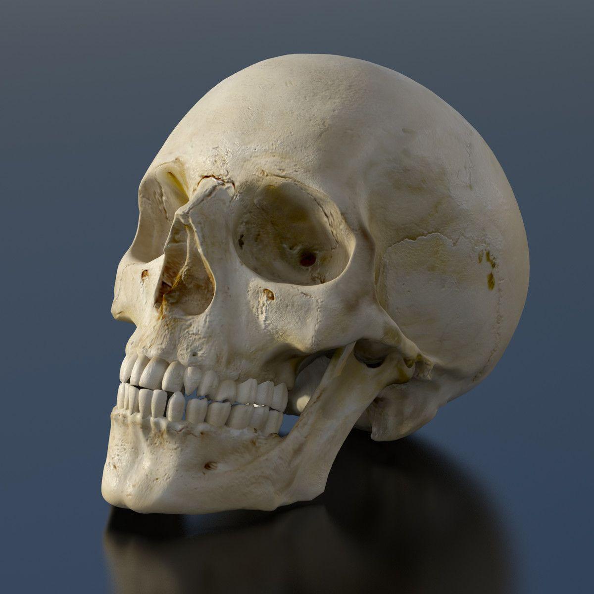 какой картинки анатомический черепа павлов пожелал главе