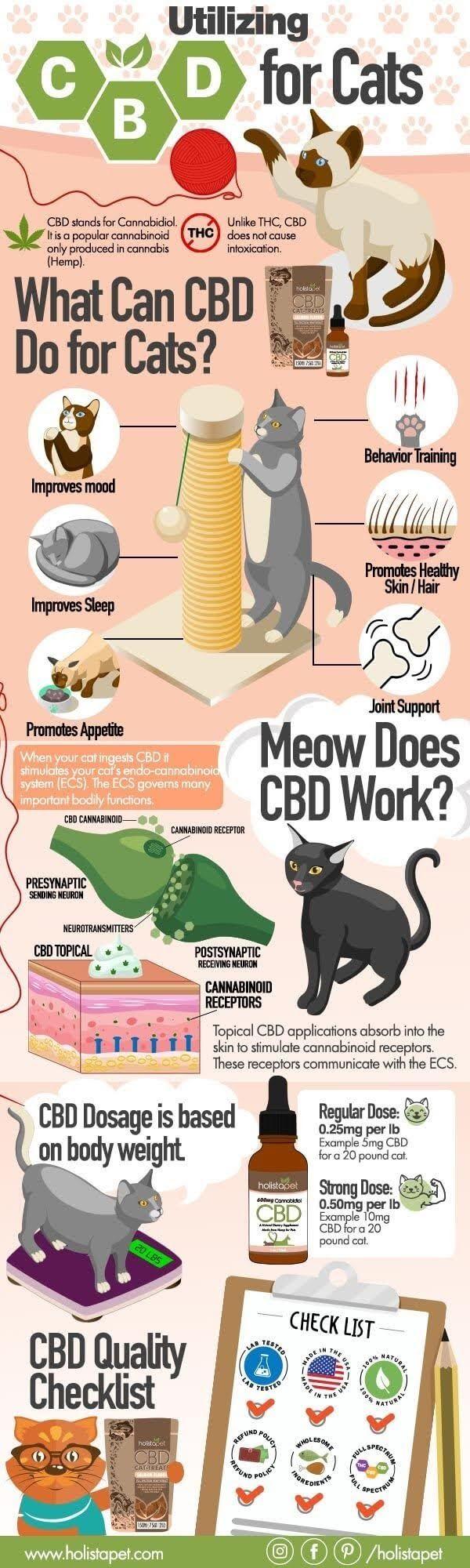 Cbd Oil For Cats Aggression