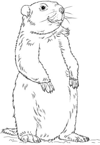 Cute Dieren Kleurplaten Hamster Image Result For Groundhog Clipart Black And White