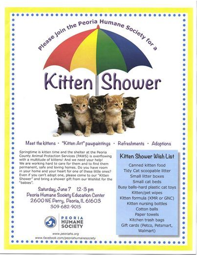 Kitten Shower Animal Shelter Volunteer Animal Shelter Cat Sanctuary