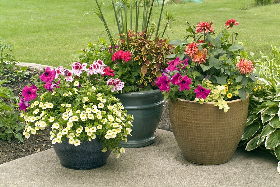 32 Ideas How Is The Layout Of The Flower Pot So It Looks Good On Sight In 2020 Flower Pots Outdoor Patio Flower Pots Patio Container Gardening