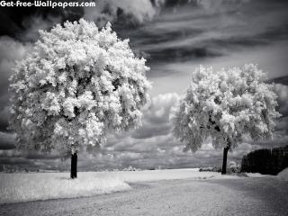 Free Spring Vintage Wallpapers, Spring Vintage Pictures, Spring Vintage Photos, Spring Vintage #11394 1920X1200 wallpaper