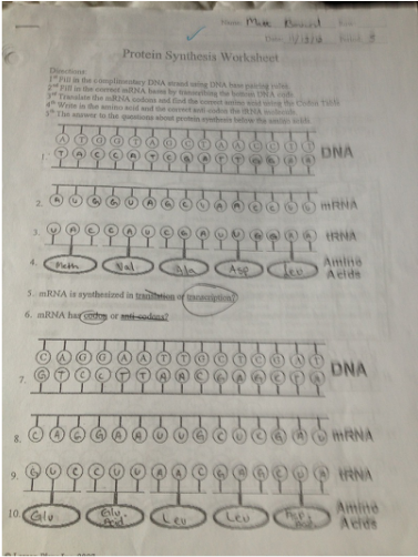Image result for protein synthesis worksheet answers | School ...