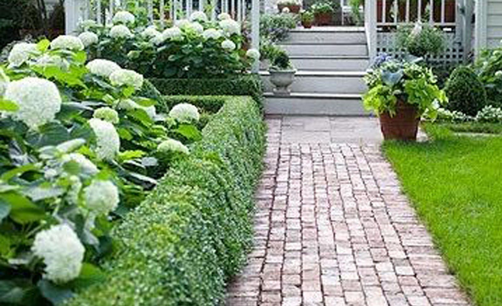 Hydrangeas and boxwood landscaping front of house for Garden hedge designs