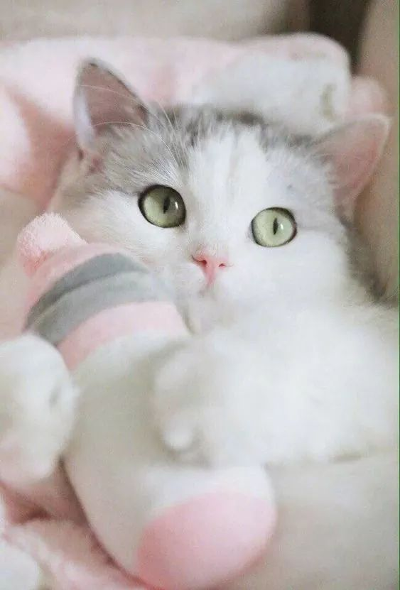 Pin By Barbara Melcher On Animals Cute Cat Gif Kitten Pictures