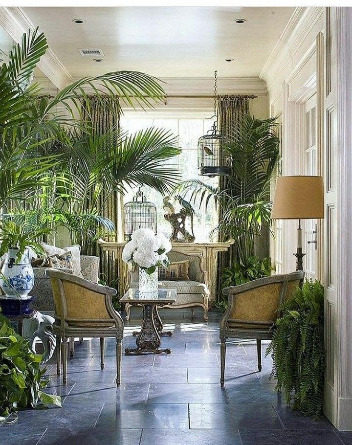 Pin by Rebekah on interior Pinterest Plants, Living rooms and Room