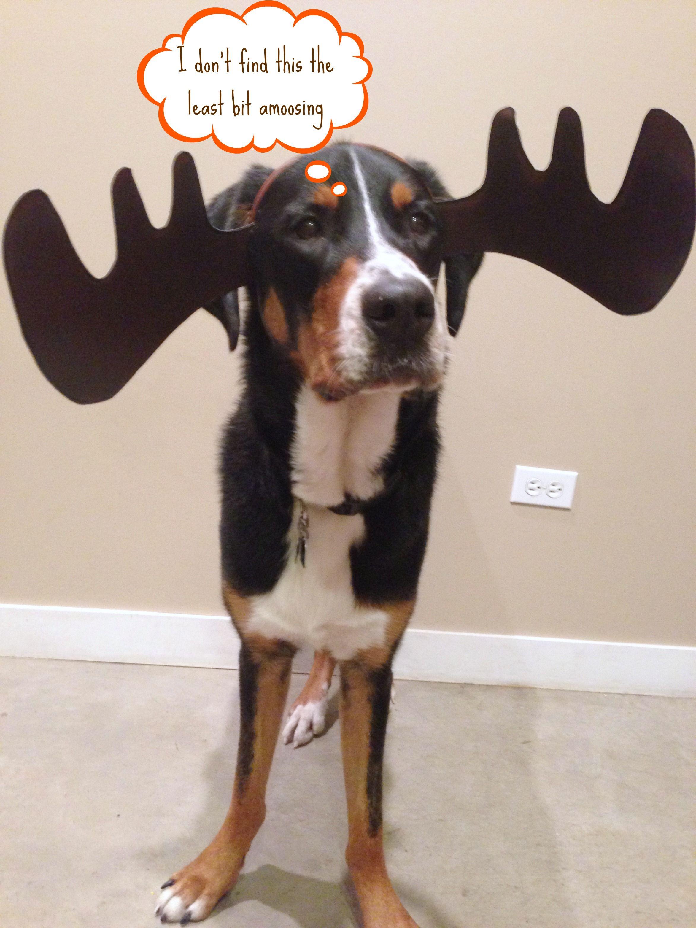 11 Best moose costume ideas | dog costumes, dog costume, pet...