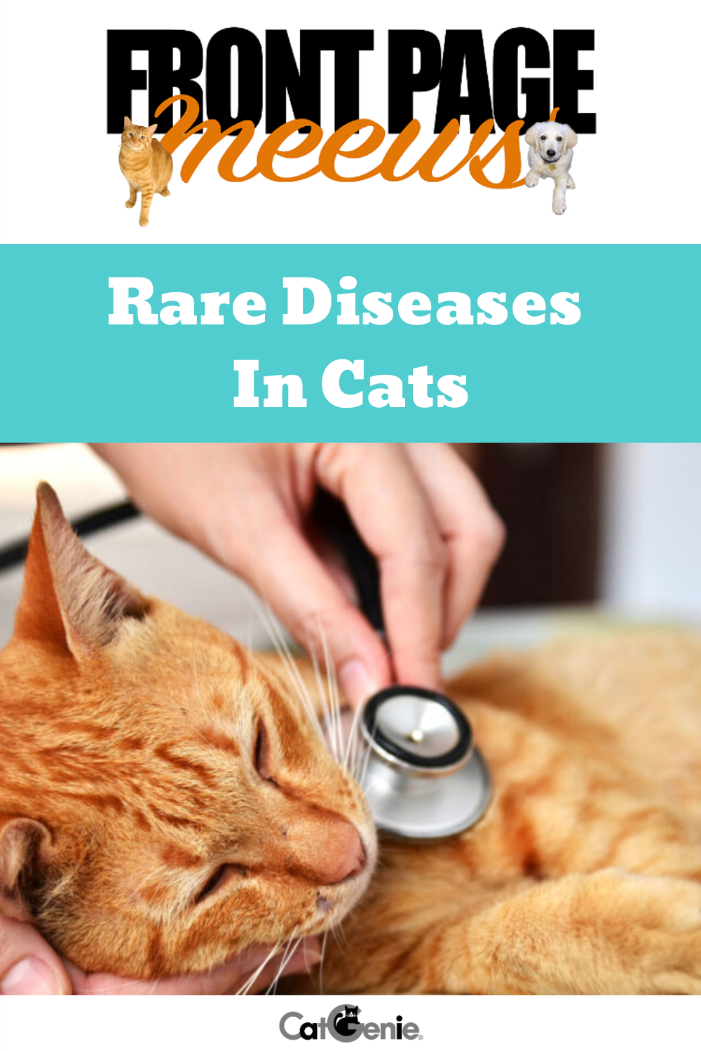 When It Comes To Our Precious Kitties It Goes Without Saying That We Want The Best For Their Health So It Doesn T Hur Cat Health Feline Health Rare Disease