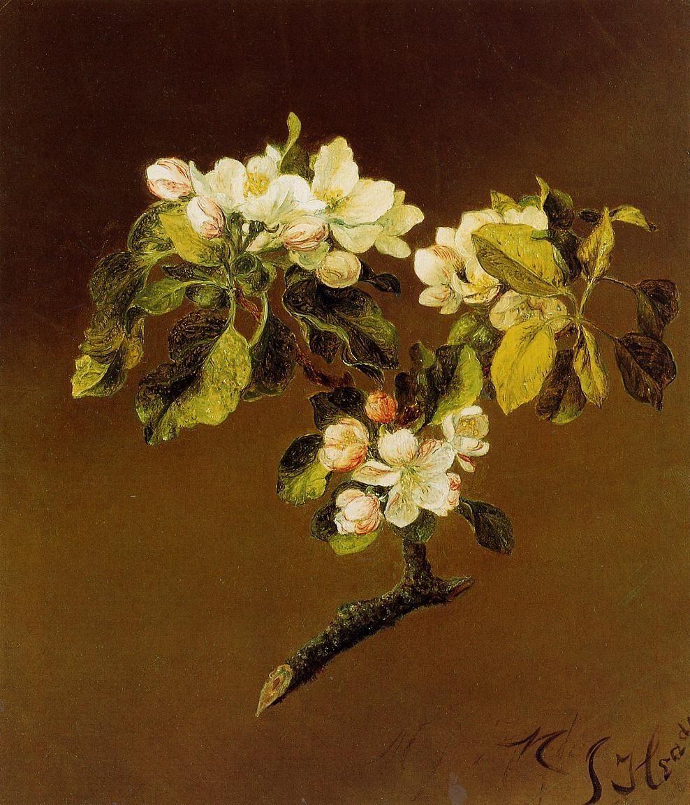 A Spray of Apple Blossoms by Martin Johnson Heade