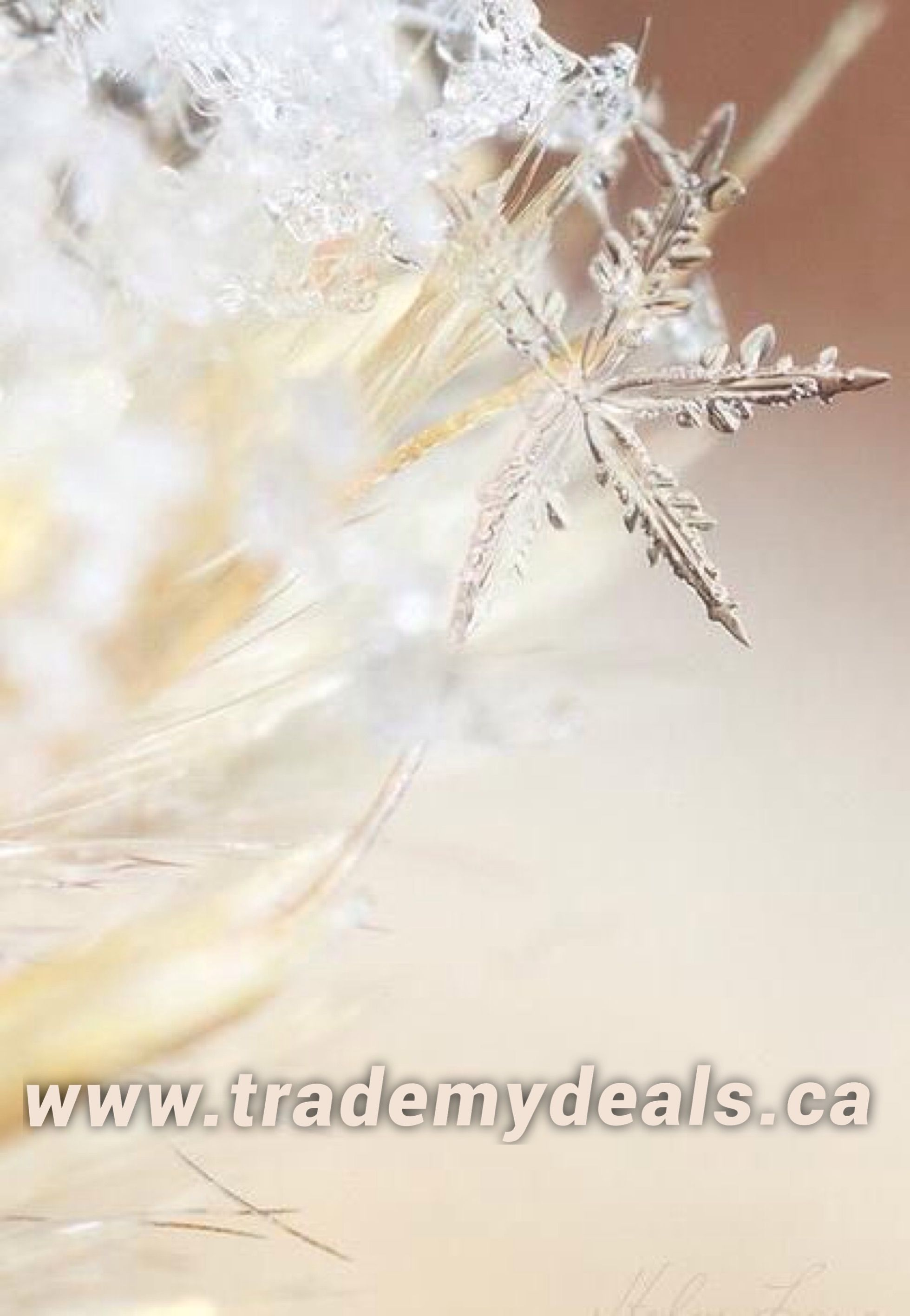 Save on shopping, find your daily discount codes and deals from top retailers on trademydeals.ca  Daily updated!