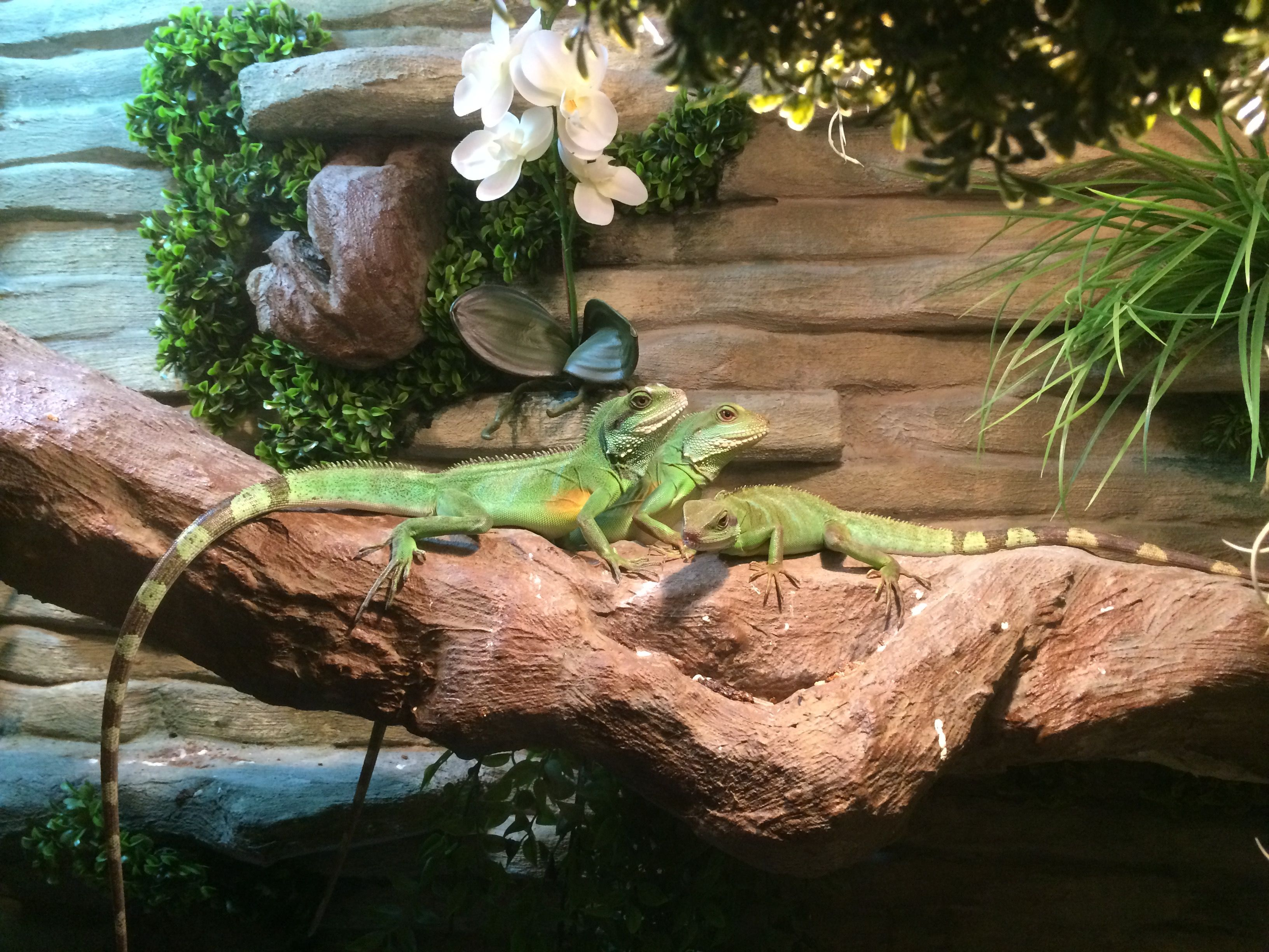 20 Beautiful Chinese Water Dragon Tanks Pictures And Ideas On Meta