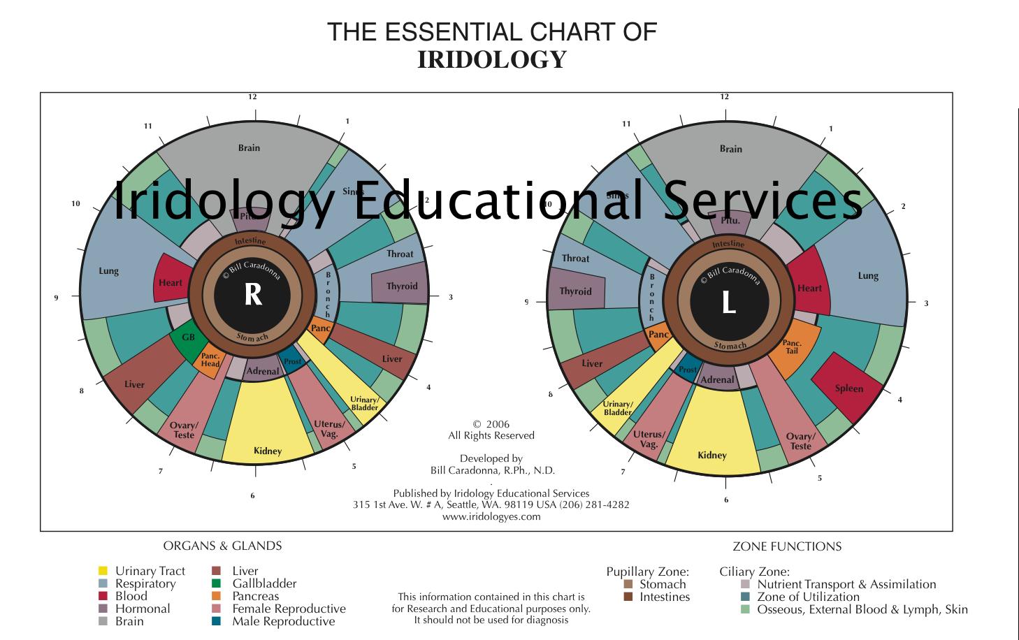 Iridology eye chart iridology chart left eye diy projects to iridology eye chart iridology chart left eye geenschuldenfo Gallery