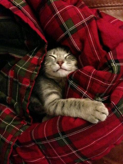 all snuggled in red...