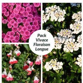 Pour un jardin fleuri de mai à octobre, ce pack de vivace ...