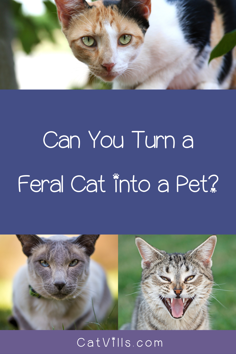What Is The Difference Between A Feral Cat And A Stray Cat Catvills In 2020 Feral Cats Stray Cat Feral Kittens
