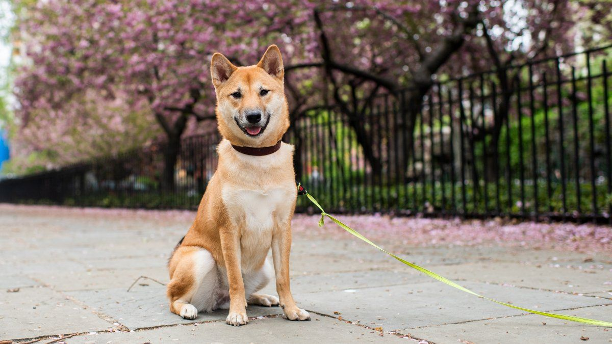 The Best Dog Breeds For City Life According To Trainers City