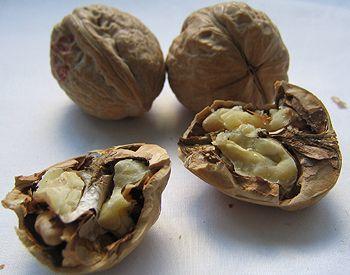 Walnuts | trees