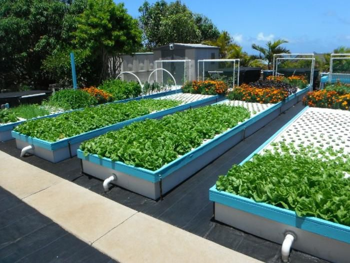 Backyard And Commercial Aquaponics Are Easier And 400 x 300