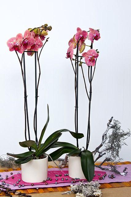 Corte de la vara floral en las orquídeas | Cultivo y Cuidado ...