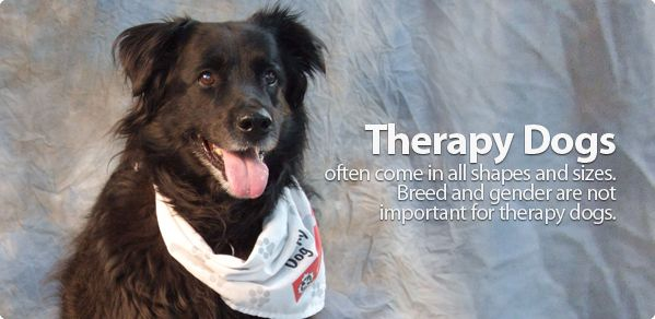 Health Benefits Of Pets Therapy Dogs Dogs Recreation Therapy