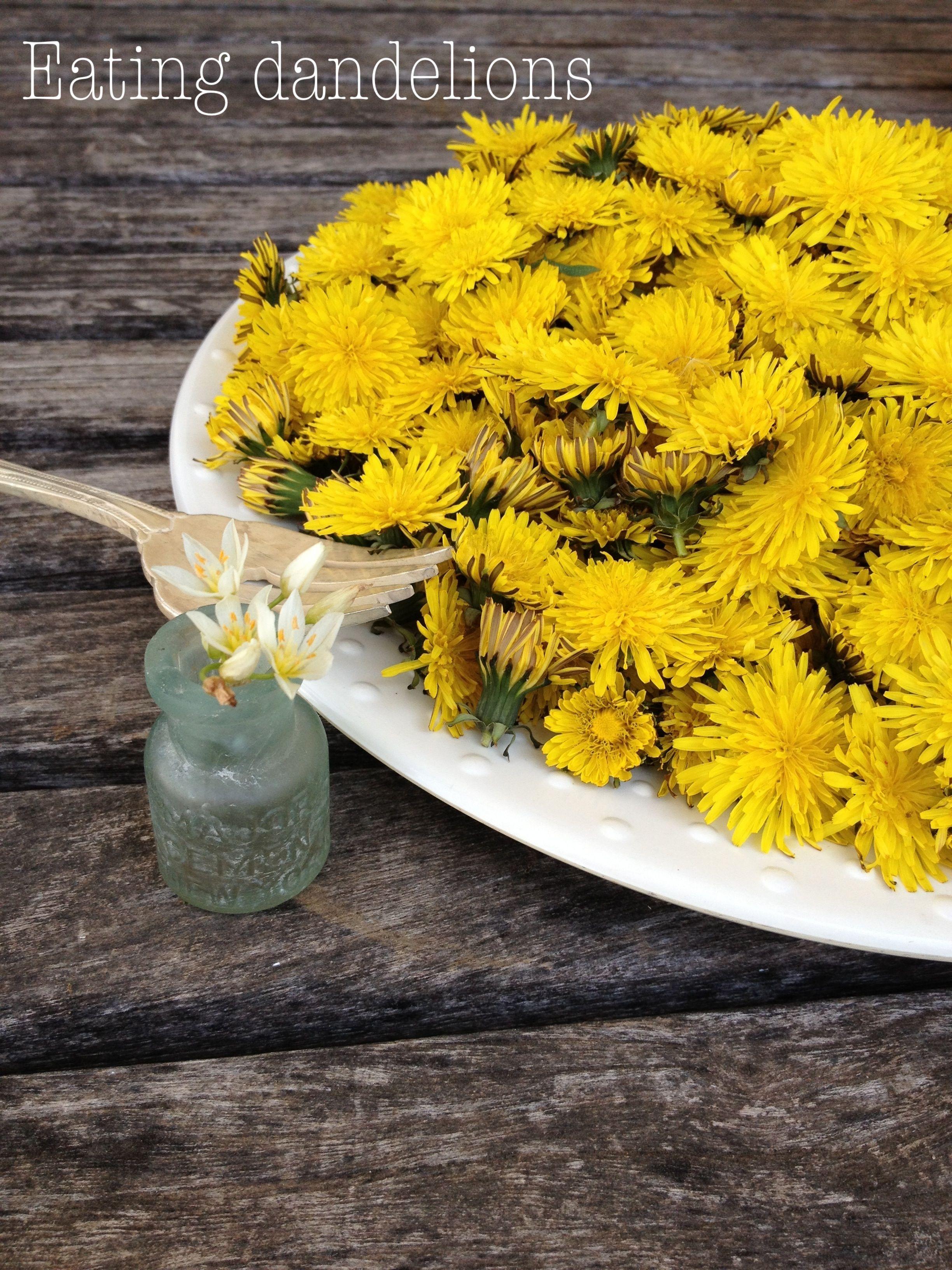 how to eat wild dandelions