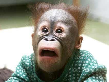 4800 Gambar Hewan Lucu Monyet Terbaru