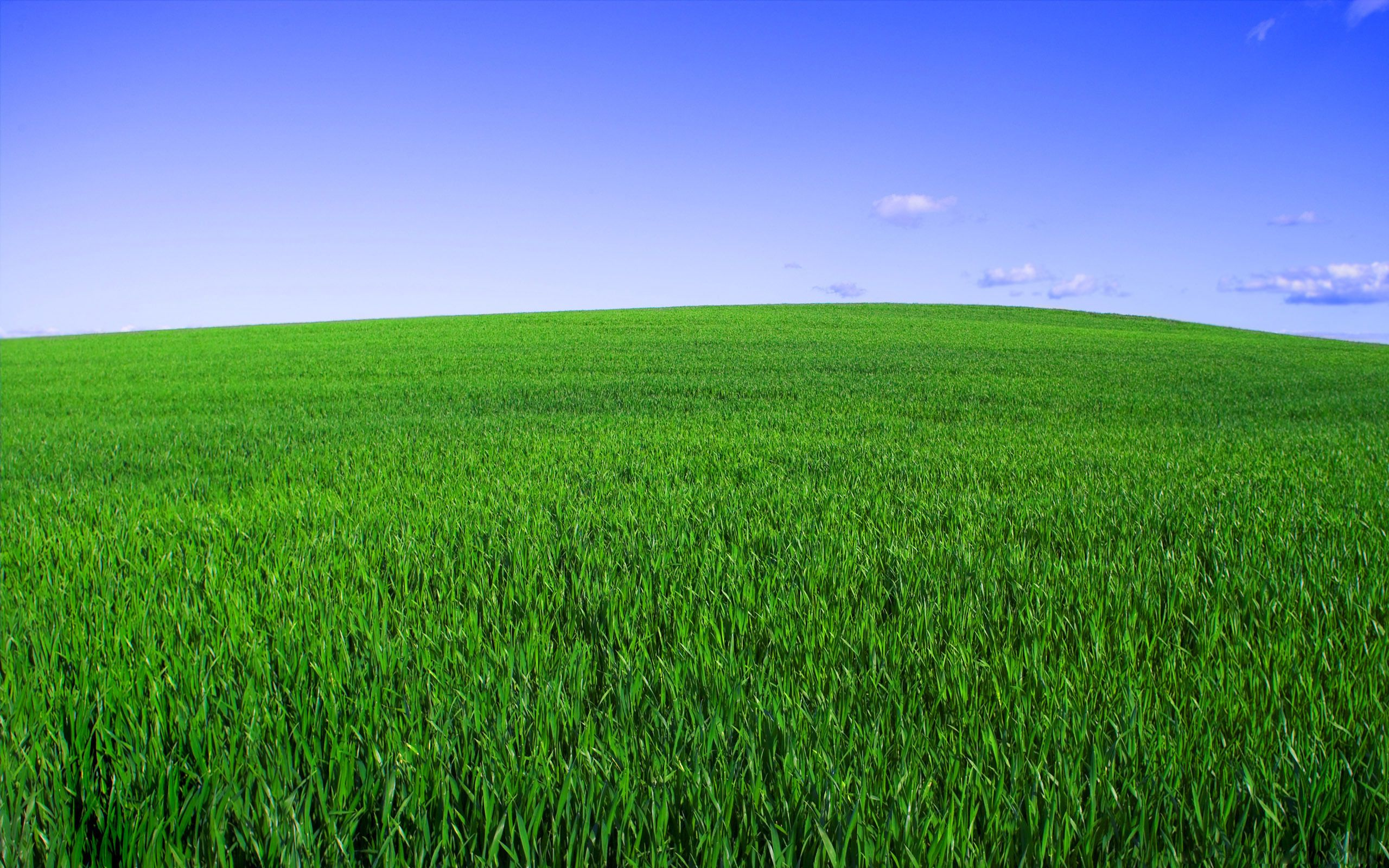 Hitman Grass Field Green Sky Horizon Landscapes 2560x1600 ...