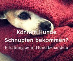 Kann Ich Meinen Hund Anstecken Wenn Ich Erkaltet Bin Dogco De Hunde Schnupfen Hund Hustet