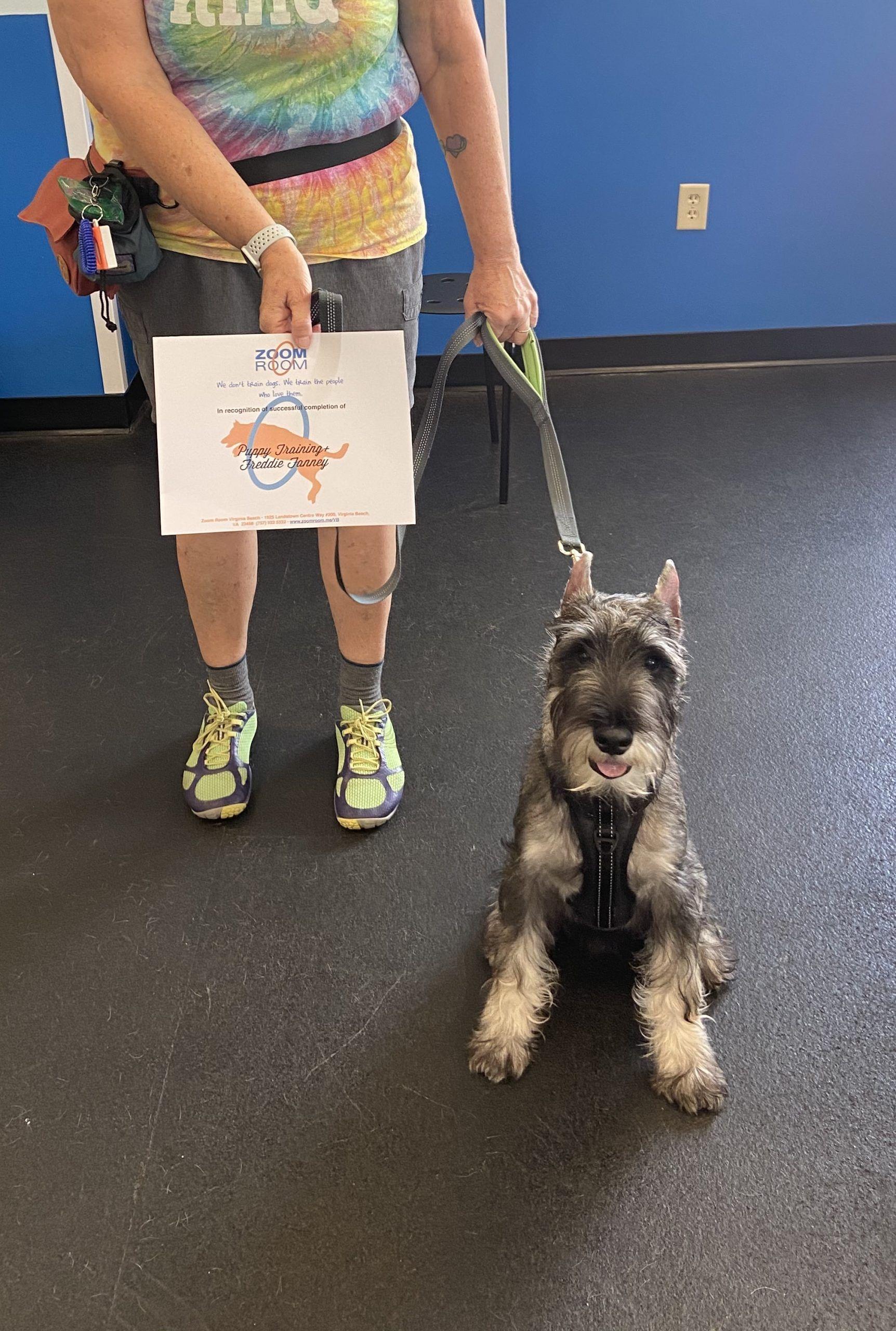 Freddie In 2020 Puppy Training Dog Lovers Indoor Dog