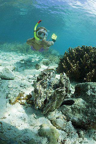 Almeja gigante y Diver, Tridacna squamosa, Micronesia, Palau