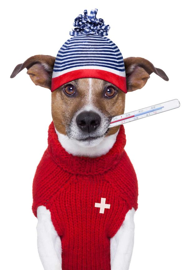 pet boarding & grooming #dog #pet #crittercamp #petboarding #petgrooming #petdaycare #adoptapet #petservices