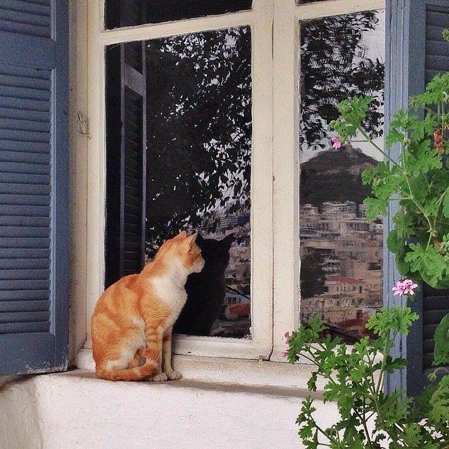 """""""Άσε με να μπω μέρες τώρα στην πόρτα σου λιώνω δυο κουβέντες να σου πω άνοιξέ μου, είμαι απ' έξω, κρυώνω."""" Κ.Μαραβέγιας"""